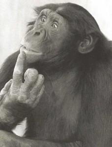 thinking-monkey.jpg